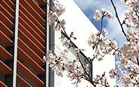 校舎外観と桜の写真